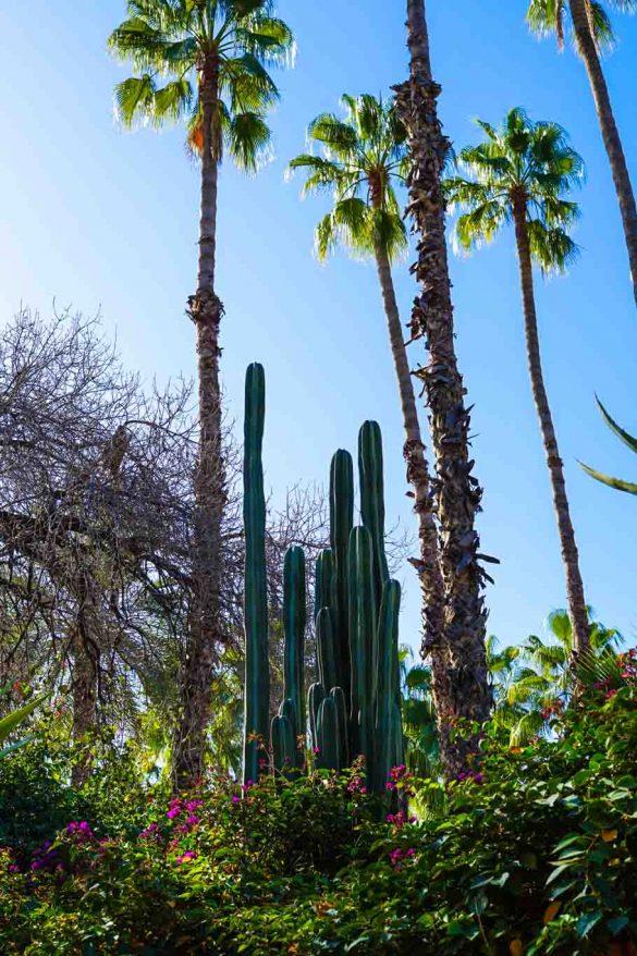 Garden of Yves Saint Laurent