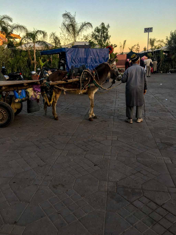 Was du in Marrakesch gesehen haben solltest
