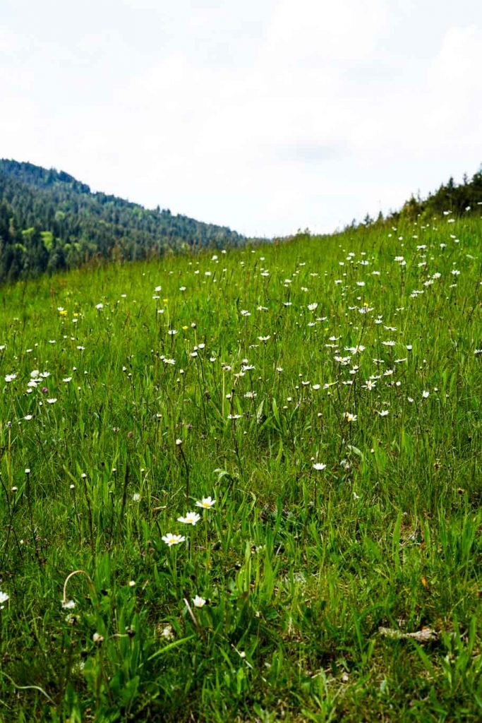 Heimatverliebt Baiersbronn Obertal