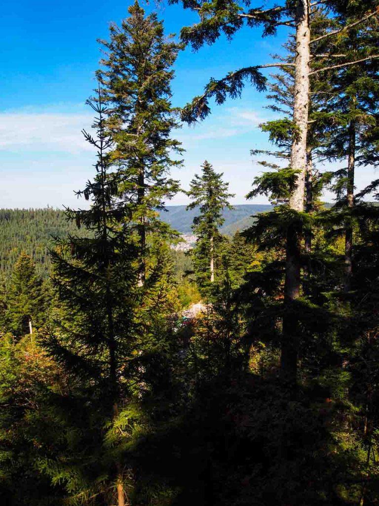 Heimatverliebt Schwarzwald